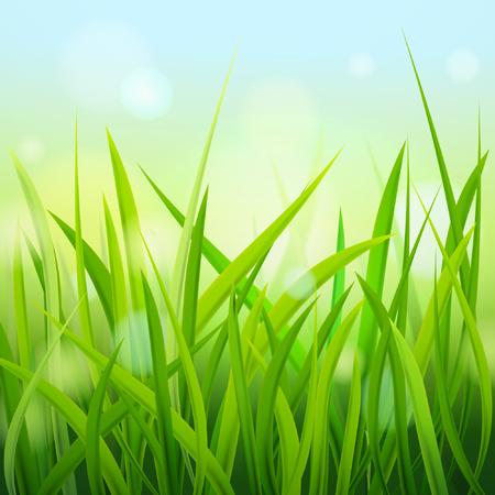grass vector: Grass. Vector illustration.
