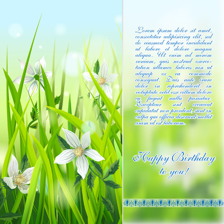 anemones: White Wild Anemones in Grass. Vector Happy Birthday card. Illustration