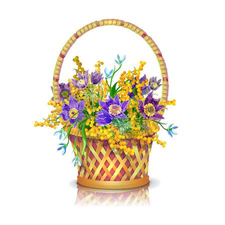 Cesta con un ramo de flores de primavera: el sueño-hierba, campanillas de invierno, mimosa.