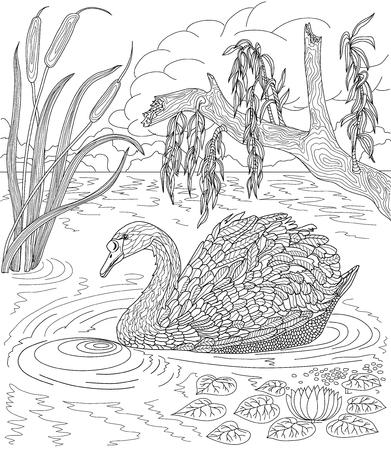 dibujado a mano pájaro - Natación del cisne en un lago con las cañas y los lirios de agua. Dibujo para colorear.