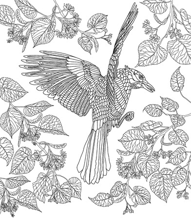 coloring sheet: Hand drawn bird - Crowned raven on a branch of a blossoming Linden-tree. Coloring page. Illustration