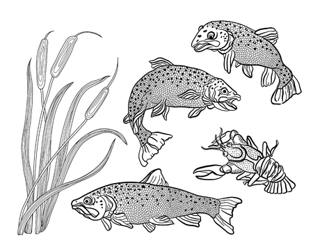 printable coloring pages: Coloring for adults. Set: fish - trout, cancer and reeds.