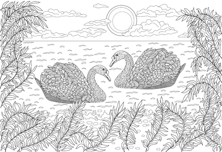 swans: Hand drawn birds - Two swans swimming in a pond. Coloring page for adult.
