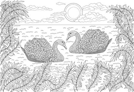 cisnes: Mano pájaros dibujados - Dos cisnes nadando en un estanque. La página de colorante para los adultos. Vectores