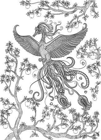 appletree: Hand drawn bird - Firebird on a branch apple-tree. Coloring page.