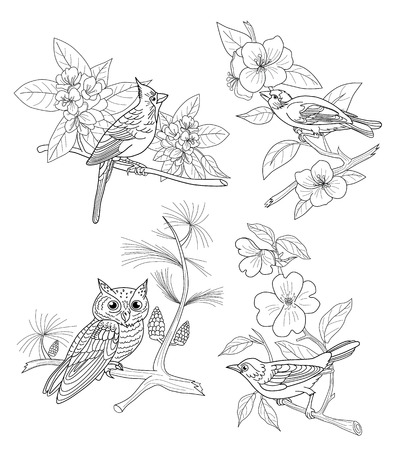 printable coloring pages: Set: Four birds on flowering branches. Coloring book for adults. Illustration