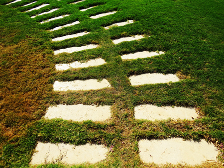 stone path: Stone path on the green grass.