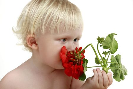 smells: Boy smells a red flower Stock Photo