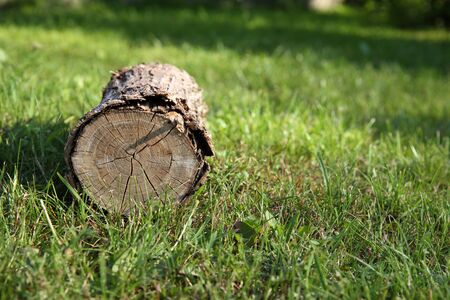 Sawn dry log lying on the green lawn. Bio-fuel