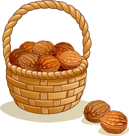 Wicker basket with walnuts isolated on a white background Ilustração