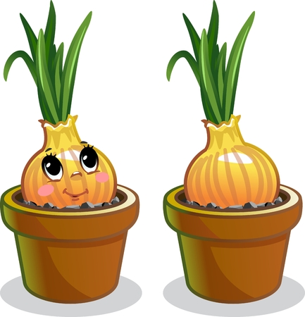 Onions in a pot Standard-Bild - 116683973