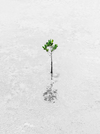 plant seed: Plant growing through dessert Survive Business Conceptual Stock Photo