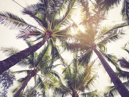 caribbean beach: Palm Tree Vintage tone over sky Summer background Stock Photo