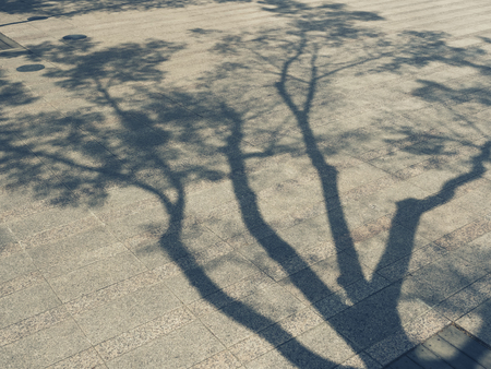 Tree Branches shadow on cement Nature Abstract background Archivio Fotografico