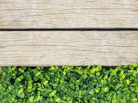 plant nature: Wooden plank with Green plant Nature texture Background Stock Photo