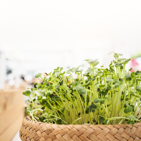 Organic green vegetable in Basket Healthy eating lifestyle Stock Photo