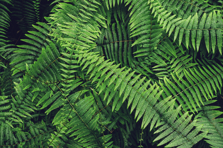 Ferns Leaf Forest Outdoor Nature abstract Background