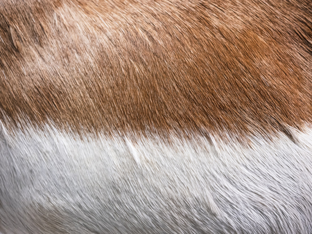 Fox Brown fur texture skin Animal Nature Background Reklamní fotografie - 119063551