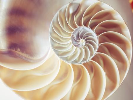 Perlenstruktur Nautilus-Symmetrie-Querschnitt im Inneren des Musters Naturhintergrundtextur
