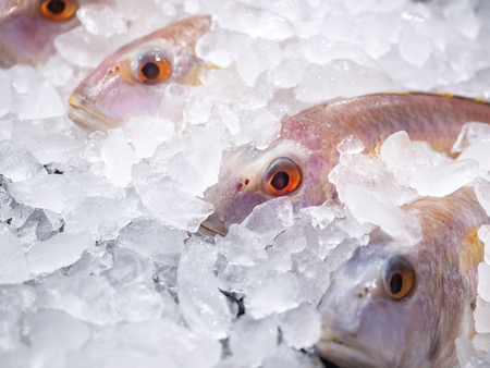 Fresh Fish on ice background Fresh market seafood Supermarket gourmet