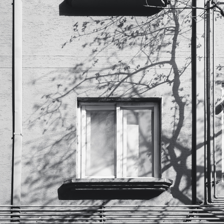 Window frame building with Tree branch Silhouette shadow Silhouette Architecture Abstract background