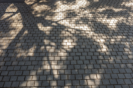 Stone tile Tree branches silhouette shade and shadow Nature abstract background Reklamní fotografie