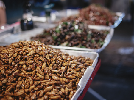 Fried Insect Street food in Thailand