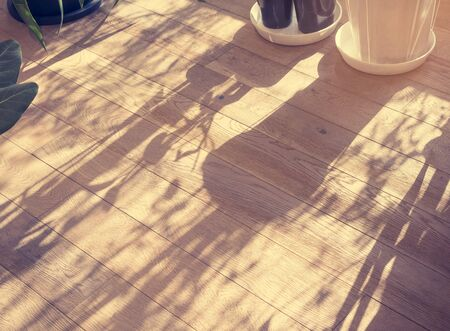 Shadow Pot Plant on wooden table Home garden