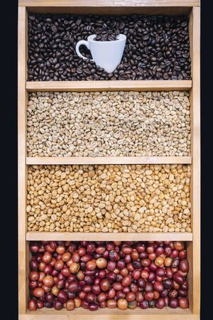 Coffee beans Display Various stages of roasting Green to Dark roasted with coffee cup Stockfoto
