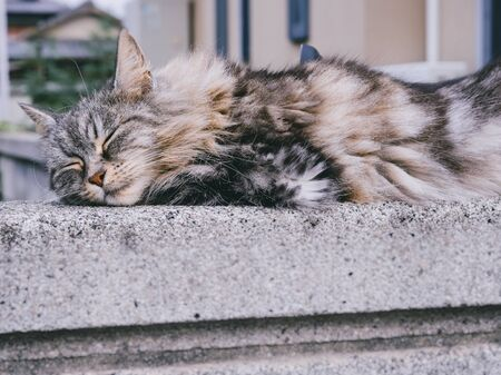 Cat sleeping on wall Ferry fluffy cat lifestyle Outdoor