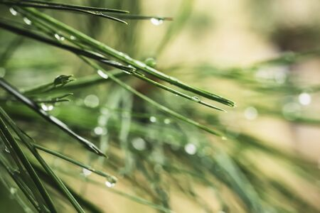Dew on Green plant details tree leave Raining season Nature background