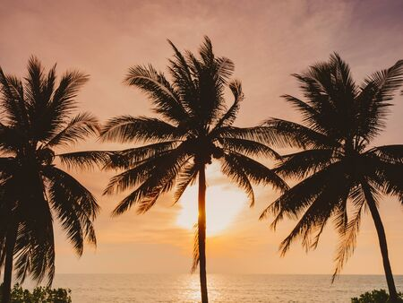Coconut Tree Sunset Beach Vacation Outdoor Summer holiday Background