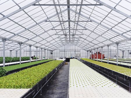 Greenhouse hydroponic Agriculture technology Food vegetable Modern farm Industry. Green house interior with people growing seed
