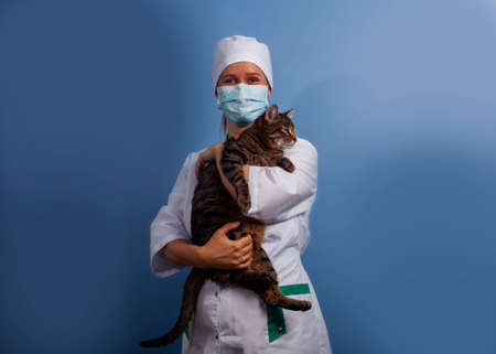 Veterinarian doctor in safety mask with cat in veterinary clinic. 写真素材 - 150640767