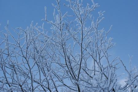Snow winter tree Harz Germany freeze