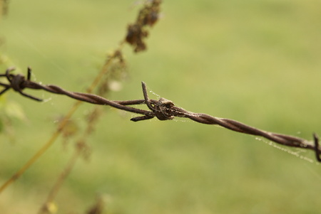 Barbed wire on field in germany agains robber of potatos or flowers crime