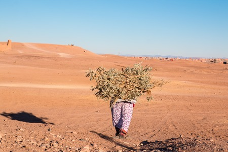 Lonely woman carrying a load of wood in desert Morocco 11 january 2017