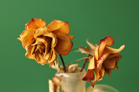 desiccated: Desiccated roses