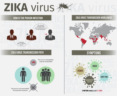 infection: Zika virus infographics include transmission, symptom, and infection path.