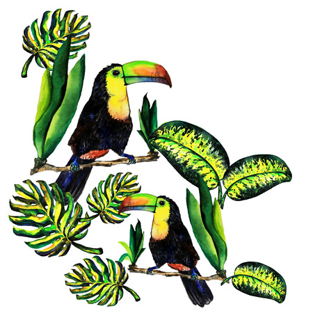 tera: Greeting card of leaves monstera and Toucan. Watercolor