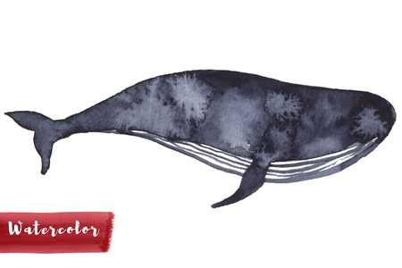 Whale in indigo color painting. Watercolor art drawing. Sea fish blue colour. Ocean animal. Isolated on white for fabric, textile, background, decoration kid illustration. silhouette element design Banco de Imagens