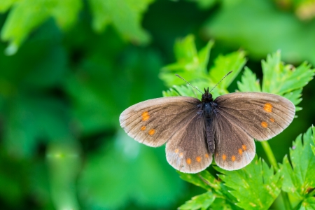 butterfly on a green leaflet in Nature  flora and fauna photo