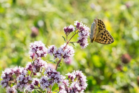butterfly on a flower in nature,  flora and fauna photo