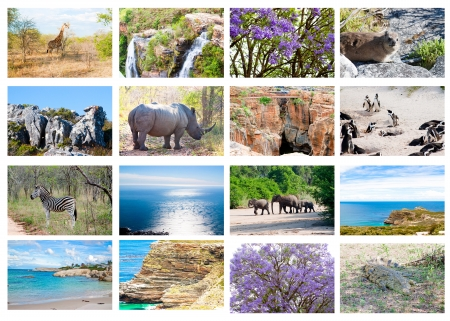 African wild animals collage, fauna diversity in Kruger Park, natural themed collection background, beautiful nature of South Africa, wildlife adventure and travel Stock Photo