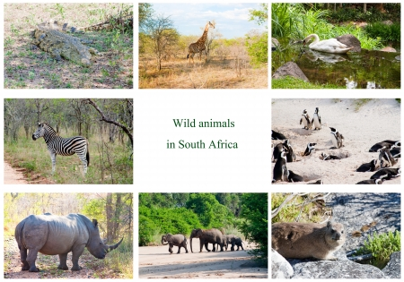 African wild animals collage, fauna diversity in Kruger Park, South Africa Stock Photo - 17291218