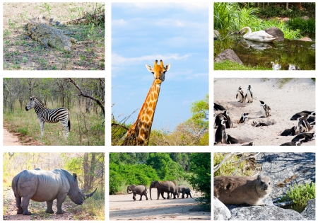 big five: African wild animals collage, fauna diversity in Kruger Park, South Africa Stock Photo