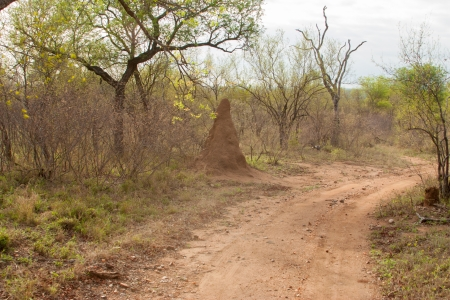 south african landscape in UAR, Kruger photo