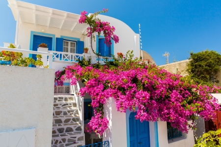 fira: Flowers bougainvillea in Fira town - Santorini island,Crete,Greece. Editorial