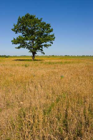 Field a tree Stock Photo - 2521020