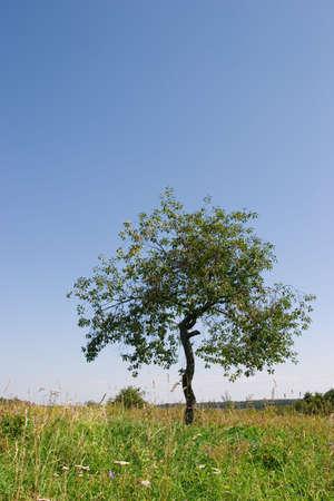 Field a tree Stock Photo - 2521019